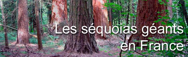 Sequoias géants de France